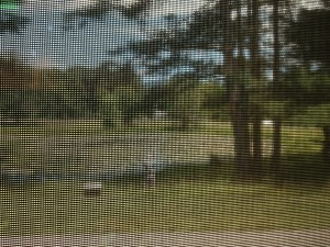 View of the lily pond through the screened window