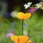 cropped-DSC_6613DSC_6613.jpg.jpg